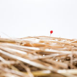 Red needle is in the haystack Stock Images