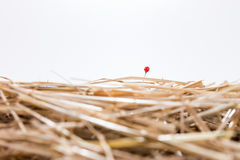 Red needle is in the haystack. Challenge and search Royalty Free Stock Photo