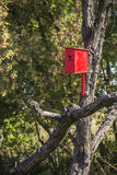 Red nesting box Stock Images