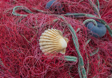 Red nets with shell Royalty Free Stock Photography