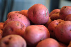 Red new potatoes against blue gray background Stock Image