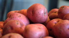 Red new potatoes against blue gray background Royalty Free Stock Image