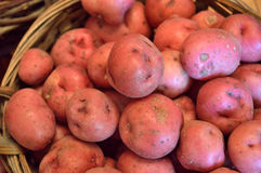 Red new potatoes in a basket Stock Images