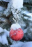 Red New Year ball on live fir-tree with frost and snow. stock photo