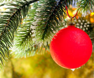 Red New Year's ball on a branch of a Christmas tree.Christmas still life Stock Photo