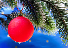 Red New Year's ball on a branch of a Christmas tree.Christmas still life Royalty Free Stock Photo