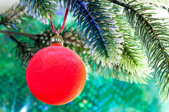 Red New Year's ball on a branch of a Christmas tree.close up on a green background Royalty Free Stock Images