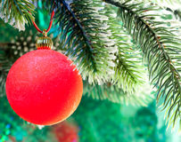 Red New Year's ball on a branch of a Christmas tree on a green background Stock Images