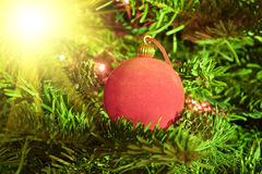 Red New Year`s ball on fir tree branches Stock Photos