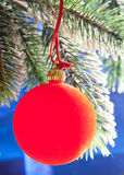 Red New Year's ball on a green New Year's fir-tree Stock Images