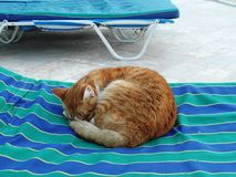 Red nice kitten or cat. Very nice cat on knees in Egypt Royalty Free Stock Image