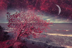 Red night at sea. Stock Photography