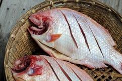 Red nile tilapia fish. (Oreochromis niloticus) on bamboo basket Stock Photos