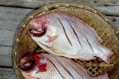 Red nile tilapia fish. (Oreochromis niloticus) on bamboo basket Royalty Free Stock Photo
