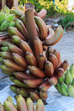 Red Nino Bananas Royalty Free Stock Photos
