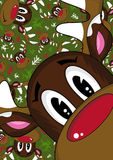 Red Nosed Reindeer Royalty Free Stock Images