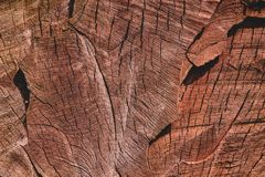 Red oak stock images