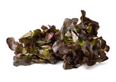 Red oak leaf lettuce. On a white background royalty free stock image
