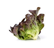 Red oak leaf lettuce. On a white background Royalty Free Stock Photo