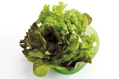 Red Oak Leaf Salad and Lollo Bianco salad in plastic bowl Stock Photos
