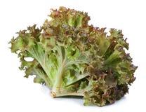 Free Red Oak Lettuce On White Background. Royalty Free Stock Image - 66143776
