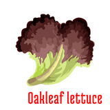 Red oakleaf lettuce vegetable isolated icon Stock Photo