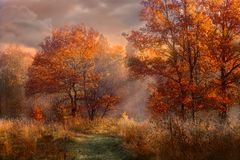 Free Red Oaks At Early Misty Morning Royalty Free Stock Photos - 131140568