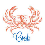 Red ocean crab with big pincers sketch icon Royalty Free Stock Photos
