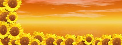 Red ocean and sunflowers Royalty Free Stock Image
