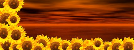 Red ocean and sunflowers Stock Image