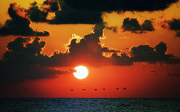 Red ocean sunset Stock Images