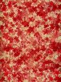 Red och krämblomningen blommar på naturlig bakgrund Arkivbilder