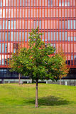 Red office building and green tree Royalty Free Stock Photography