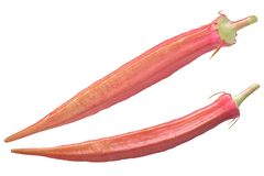 Red okra ochro a. esculentus. Red okra/ochro or ladies` fingers Abelmoschus esculentus Stock Photo