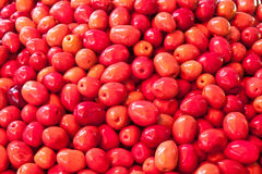 Red olives Stock Photos