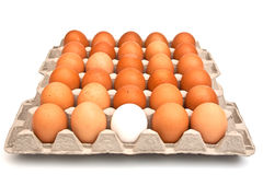 Red and one white eggs Royalty Free Stock Image