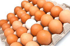 Red and one white eggs Royalty Free Stock Images