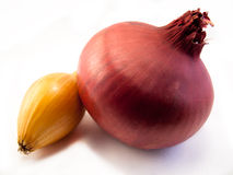 Red Onion. Shot on a white background Stock Images