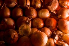 Red onion. Set of onions. It can be used as a background Stock Photography