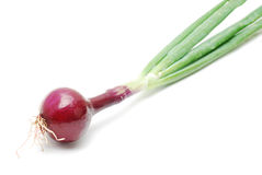 Red onion Royalty Free Stock Images