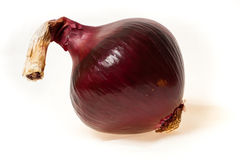Red onion. Giant red onion cultivated by my father in law Stock Photography