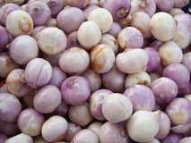 Red onion. Stock Photos