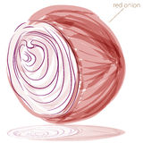 Red Onion. An image of a red onion watercolor painting Royalty Free Stock Images