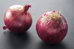 Red onion. Red sweet onion with gray background Stock Image