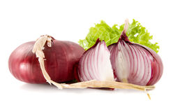 Red onion. Red sliced onion and fresh salad leaf  on a white background Stock Photography
