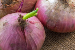 Red onion Stock Images