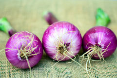 Free Red Onion Royalty Free Stock Images - 55725369