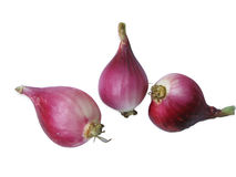 Red onion. With path isolated on background white Royalty Free Stock Image