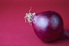 Red onion against pink background, close up Stock Image