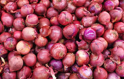 Red onion background Stock Photography